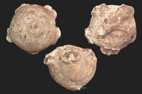 Neoplatycrinus
