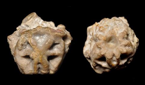 Botryocrinus