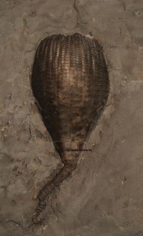 Ichthyocrinus