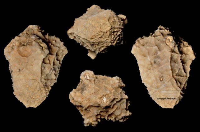 Lampterocrinus