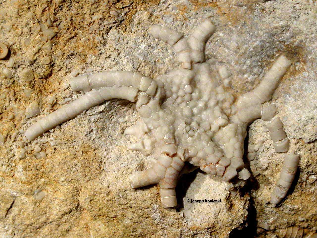 Gilbertsocrinus