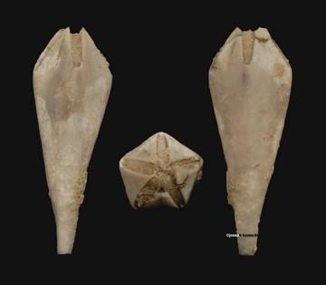Troosticrinus