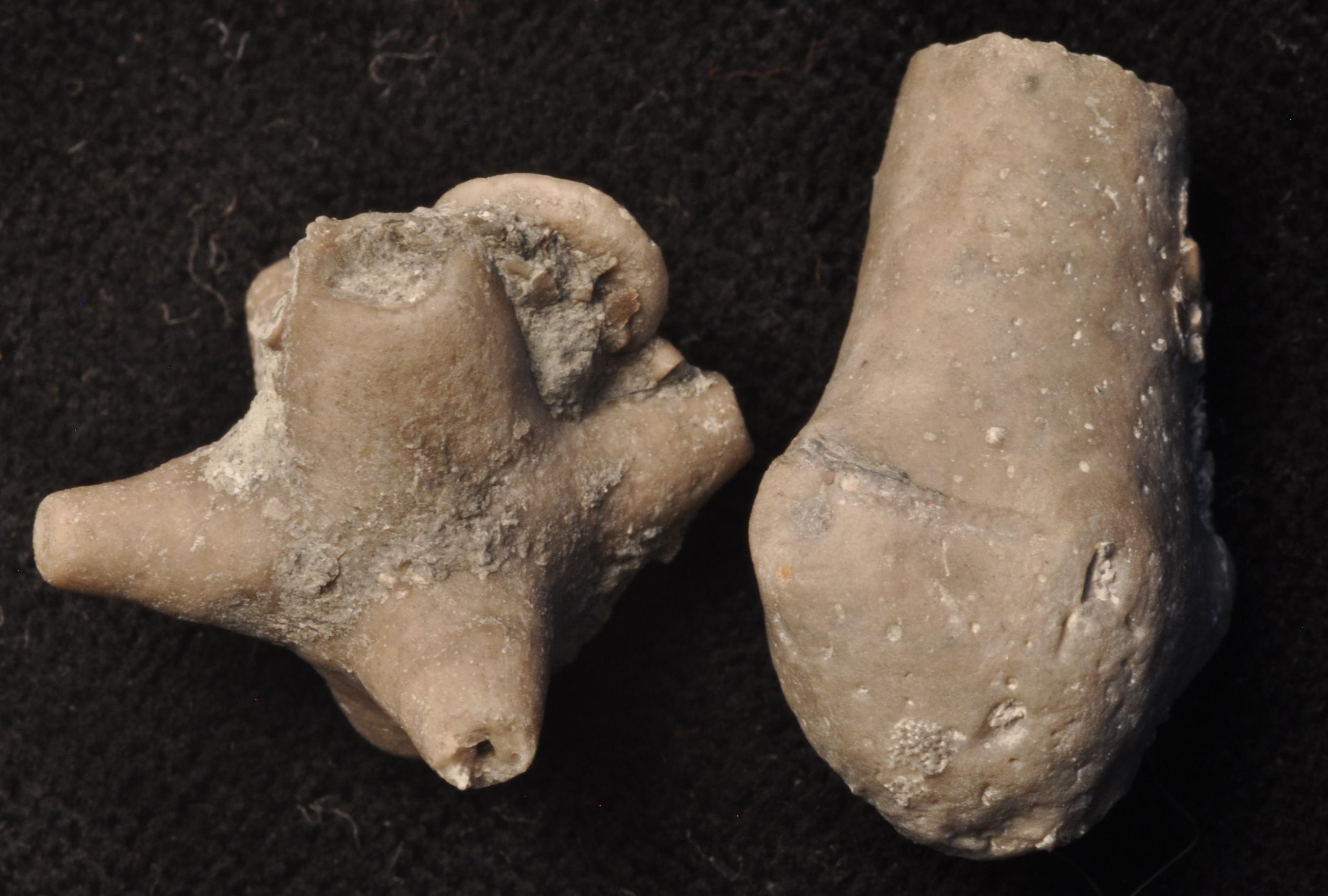 Ancyrocrinus