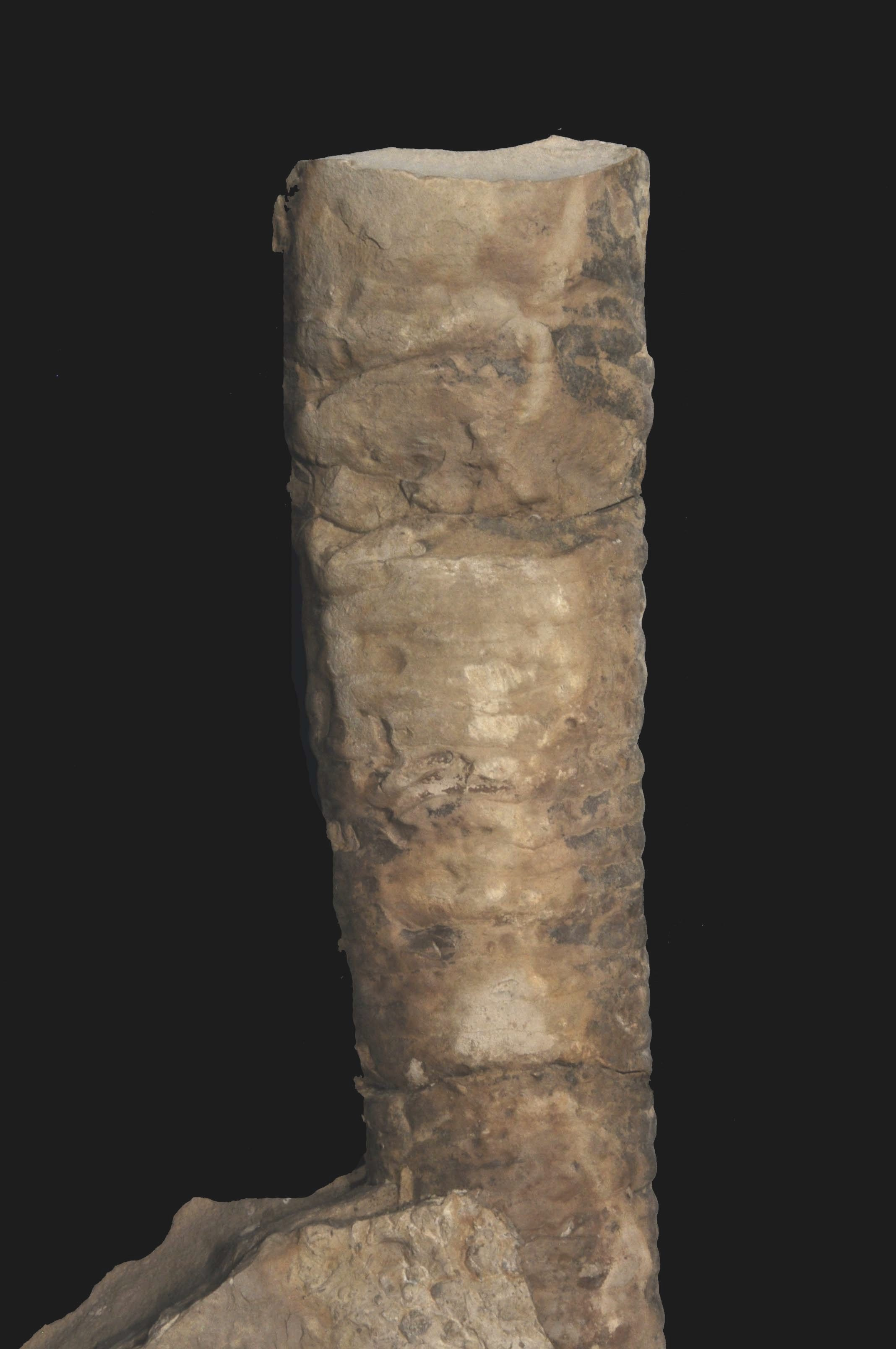 Endoceras